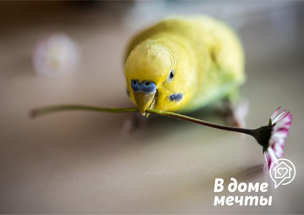 Питание для птиц в период линьки: нюансы и выбор натуральных подкормок