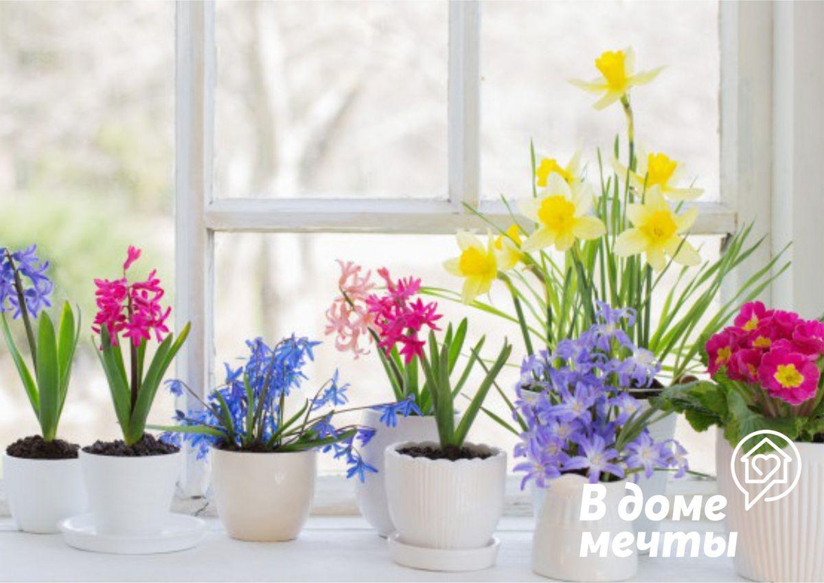 Как красиво разместить цветы на подоконнике: семь ярких концепций