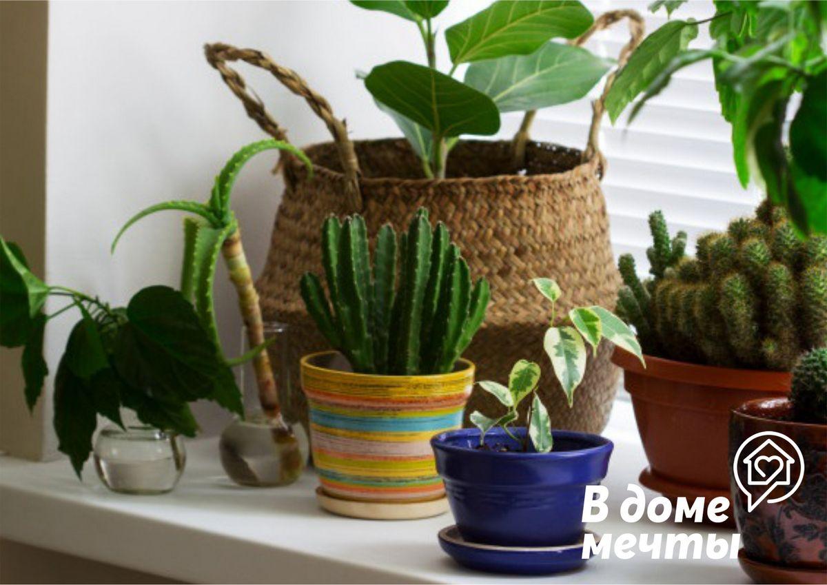 Самые популярные экзотические домашние растения: топ-7 ярких вариантов