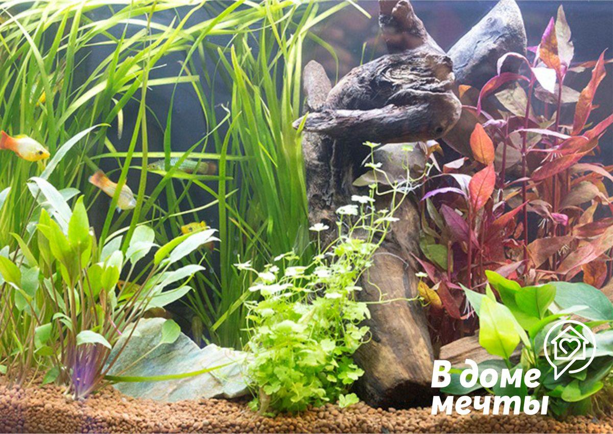 ✔Эстетический вид. Почва в аквариуме должна выглядеть привлекательно