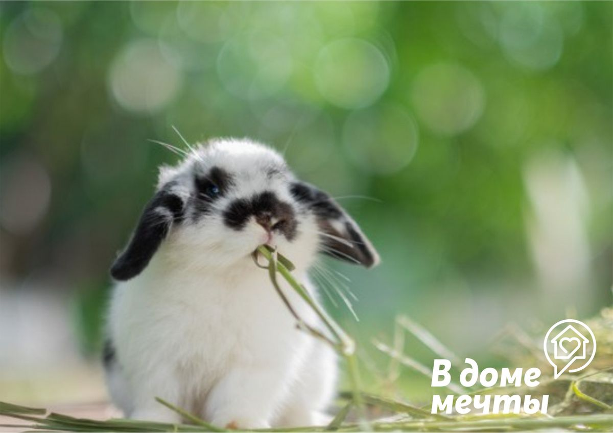 Рацион кролика: семь полезных луговых трав