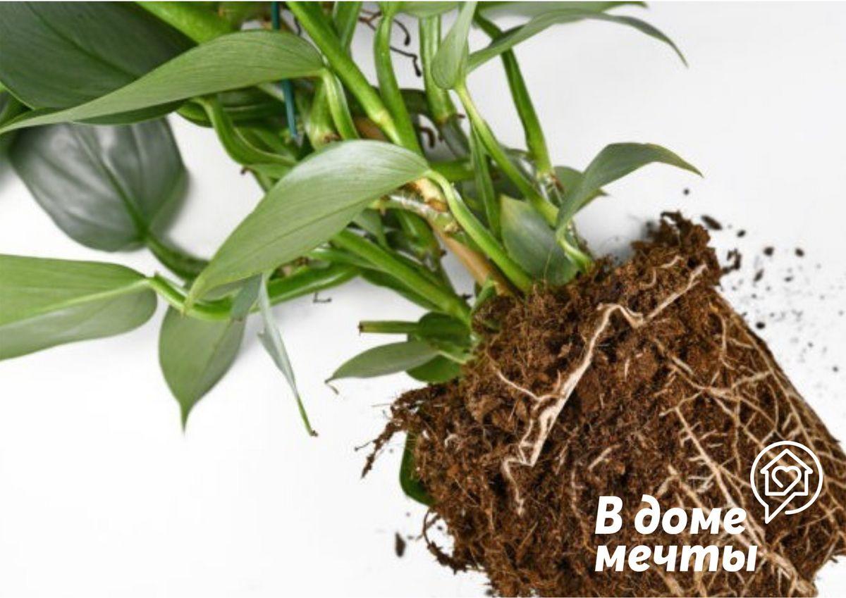 Растение, требующие минимального ухода: топ-9 разновидностей