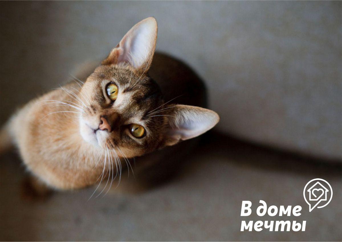 Стерилизация домашней кошки: уход за питомцем