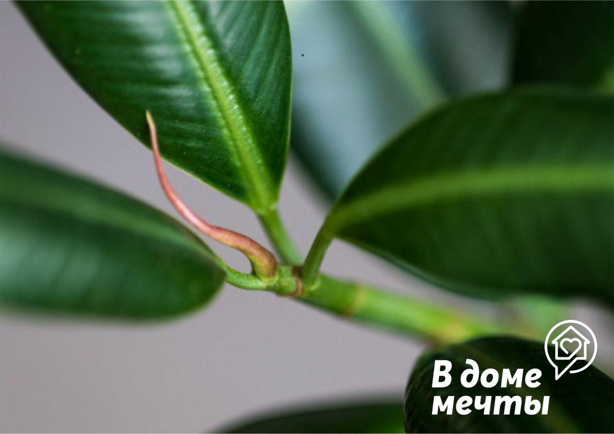 Двенадцать самых красивых миниатюрных деревьев для домашнего выращивания