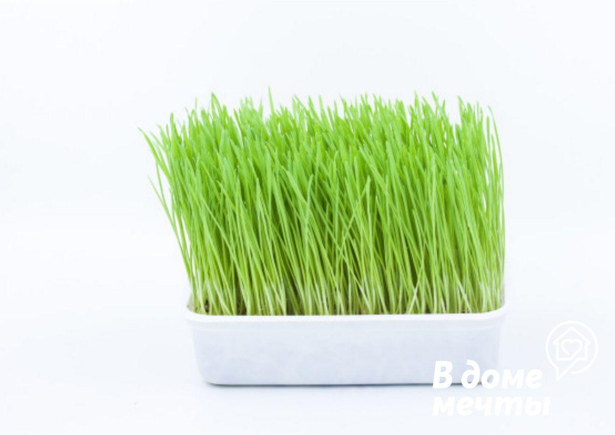 Как вырастить траву самостоятельно