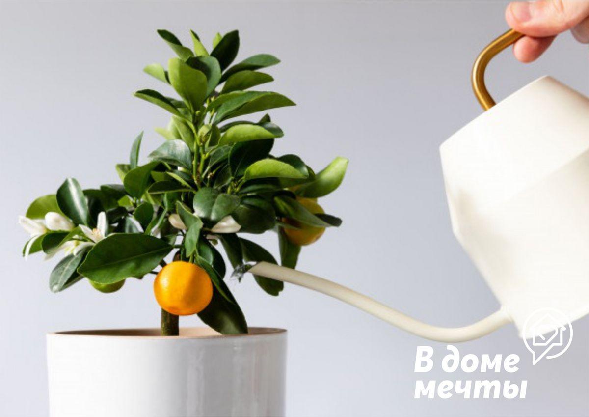 Комнатные цветы для спальной комнаты: самые красивые и полезные