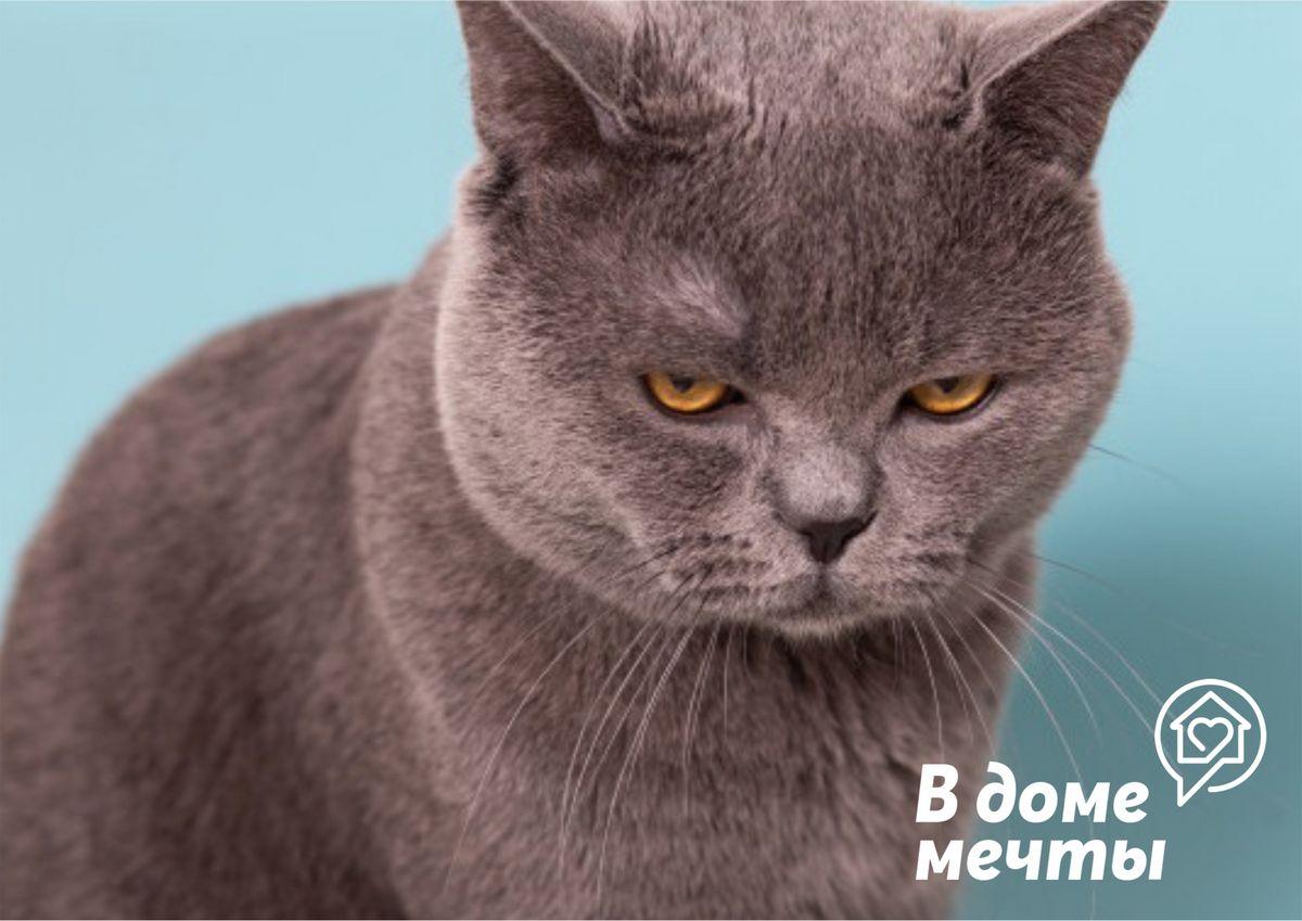 Топ-5 самых обидчивых и мстительных кошек