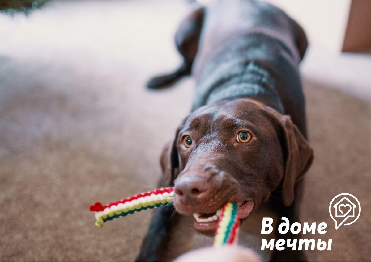 Какой вид спорта выбрать для собаки? 8 лучших вариантов