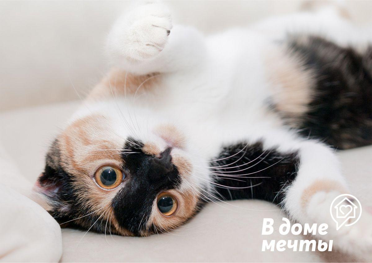 Недостатки закрытого лотка для кошки: