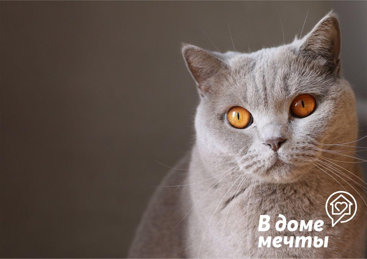 Любит ли вас ваш кот или кошка? Как это понять