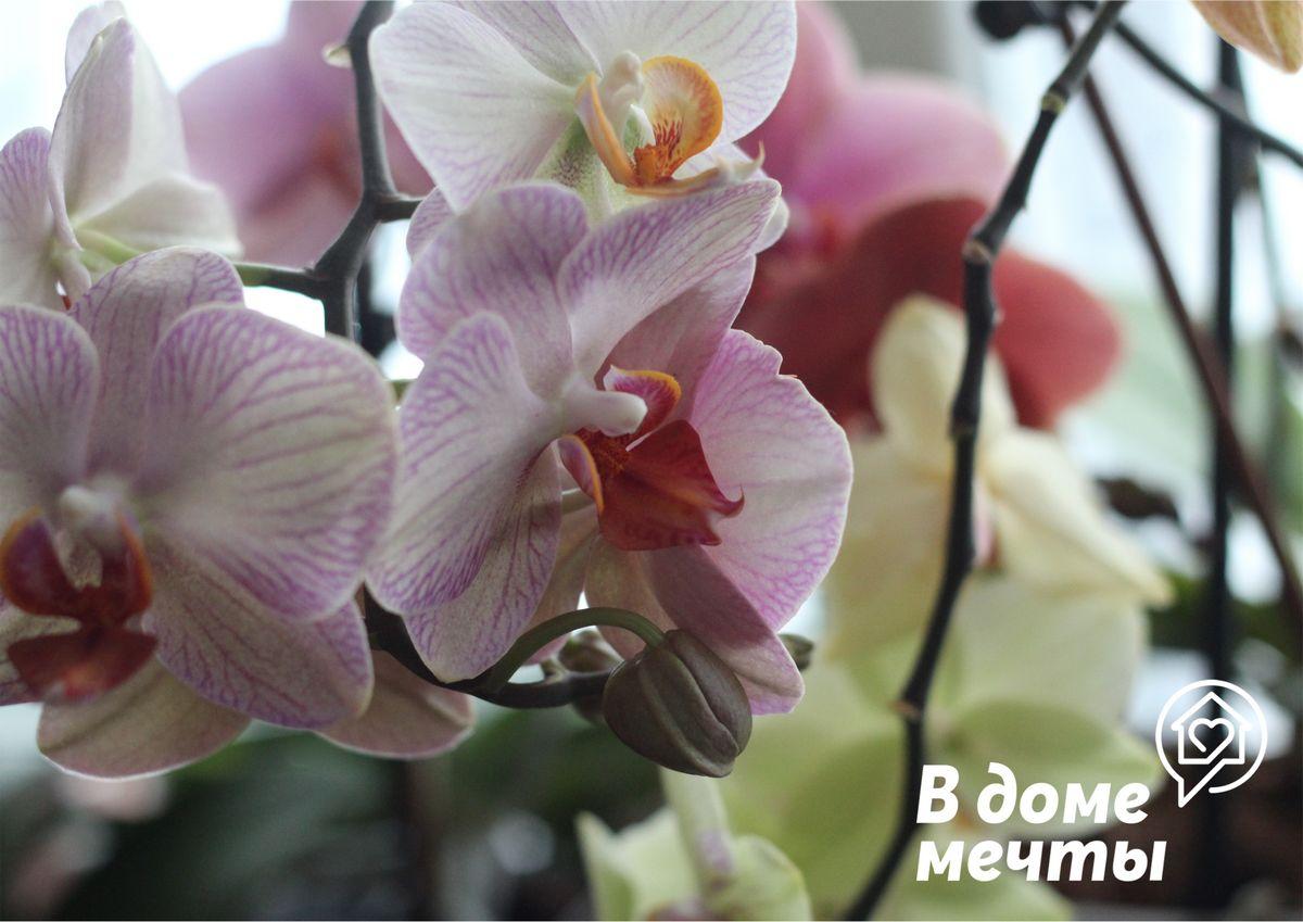 Орхидея не наращивает цветоносы: восемь основных причин отсутствия цветения