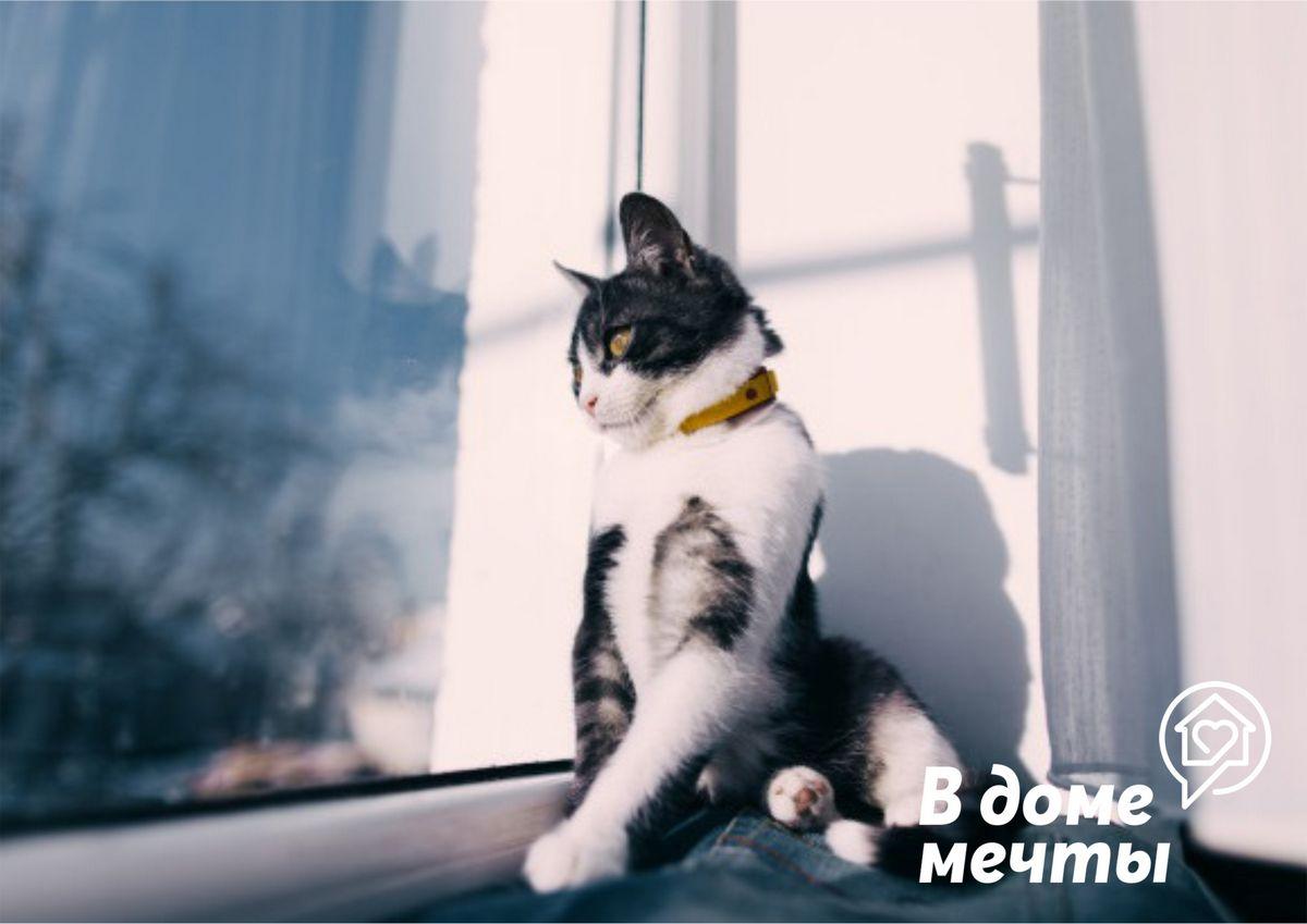 Окно и кошка: как уберечь питомца от падения и травм