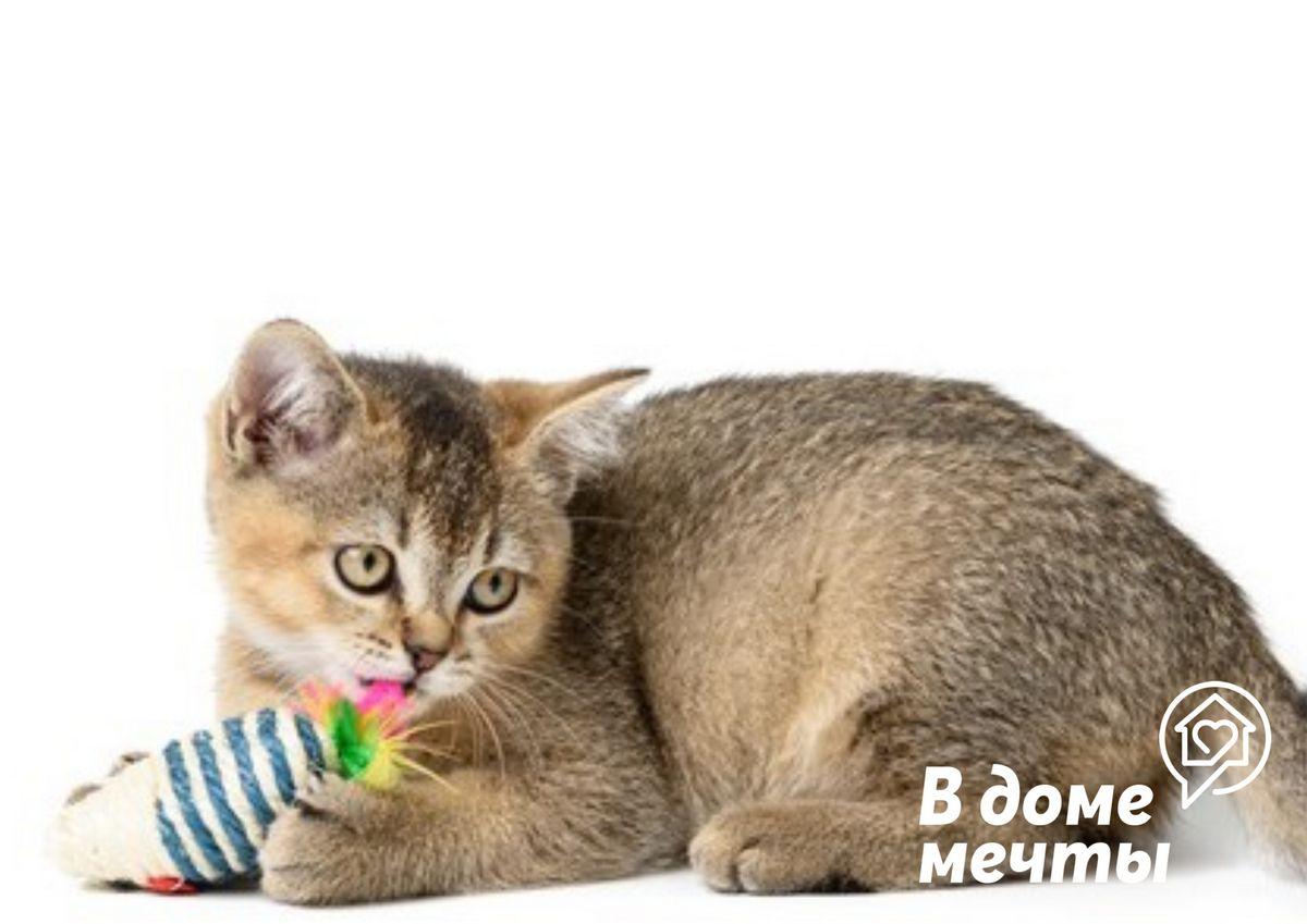 Как отучить кошку от ночной беготни