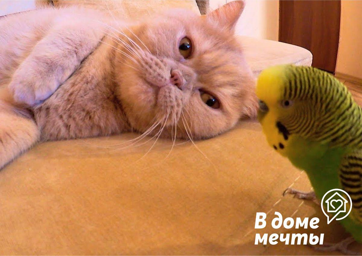 Основы содержания двух разных питомцев в доме – птицы и кошки