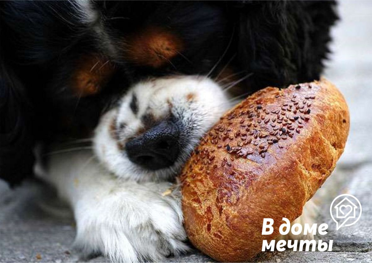 Хлеб как продукт рациона собаки: можно или нельзя