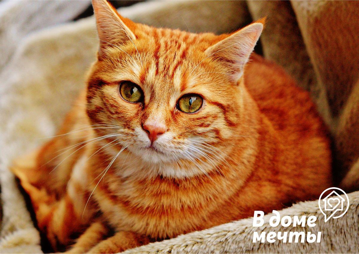 Достоинства закрытого лотка для кошки: