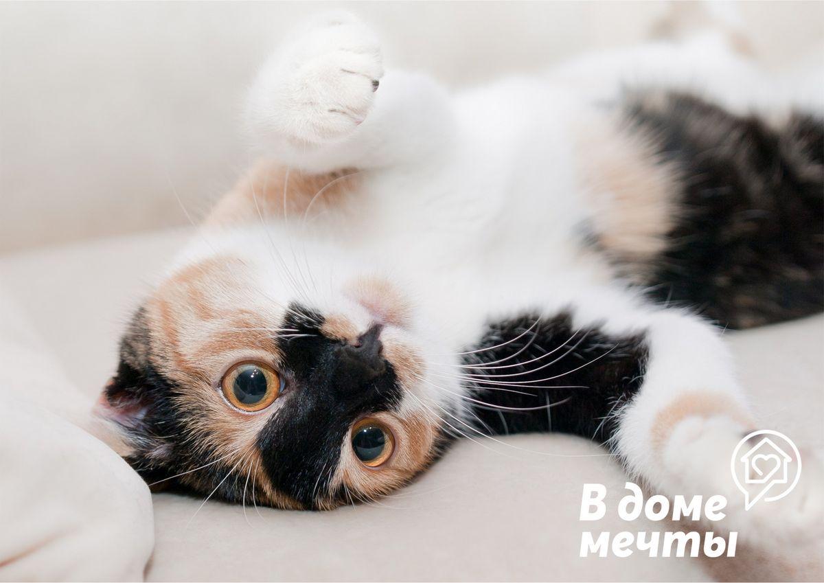 Как понять, что кот любит хозяина: