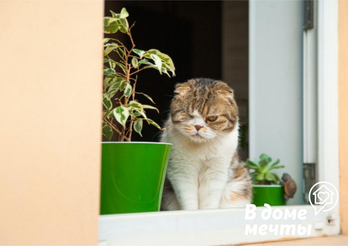 Как обезопасить кошку при открытых окнах в доме