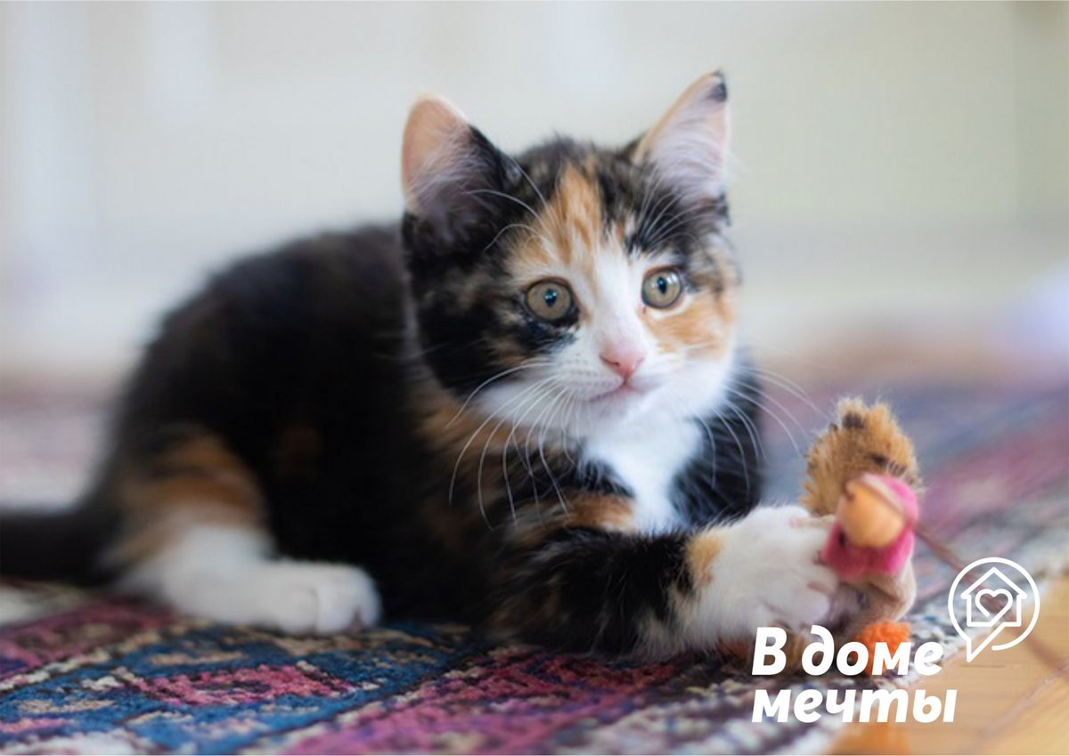 Как отучить кошку от активных игр в ночное время