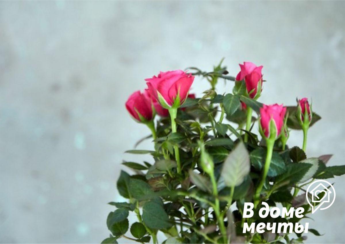 Пересаживать цветок можно, но только в начале марта