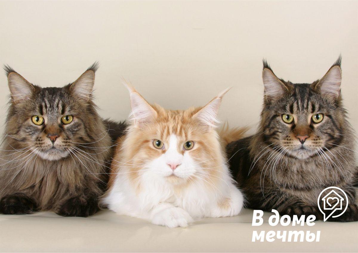 Самые игривые и активные: пять пород веселых и коммуникабельных кошек