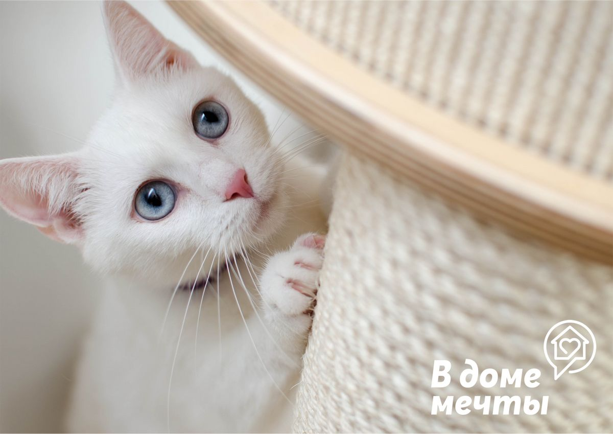 Любовь кошки нужно заслужить