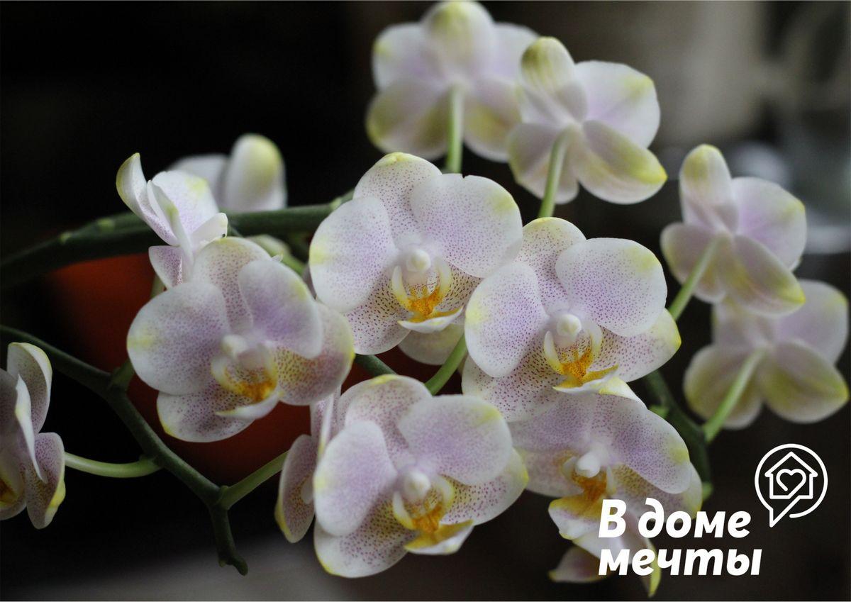 Никогда не повторяйте этих ошибок в уходе за орхидеей! Самые опасные ошибки при выращивании тропической орхидеи в домашних условиях