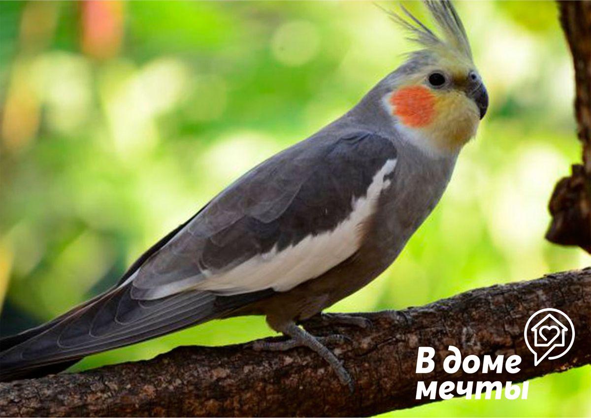 Хотите купить попугая? Ознакомьтесь с самыми популярными породами попугаев для домашнего содержания!