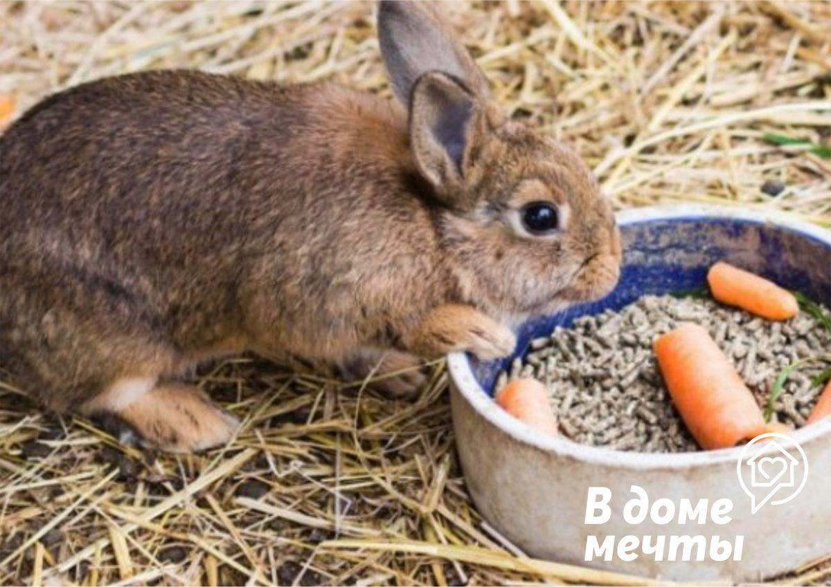Чем кормить кролика: разновидности кормовых смесей