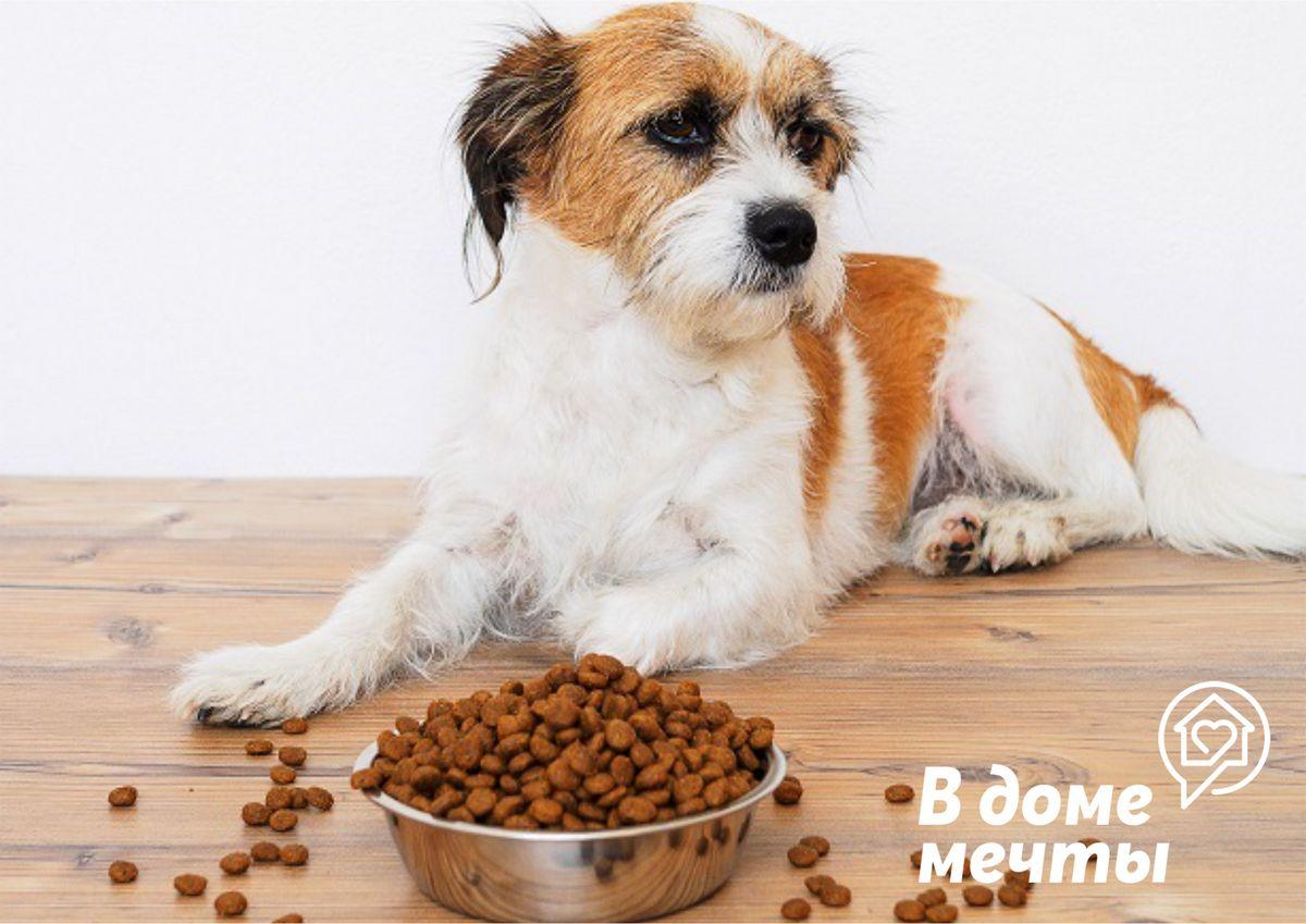 Четыре правила хранения сухих кормов для животных