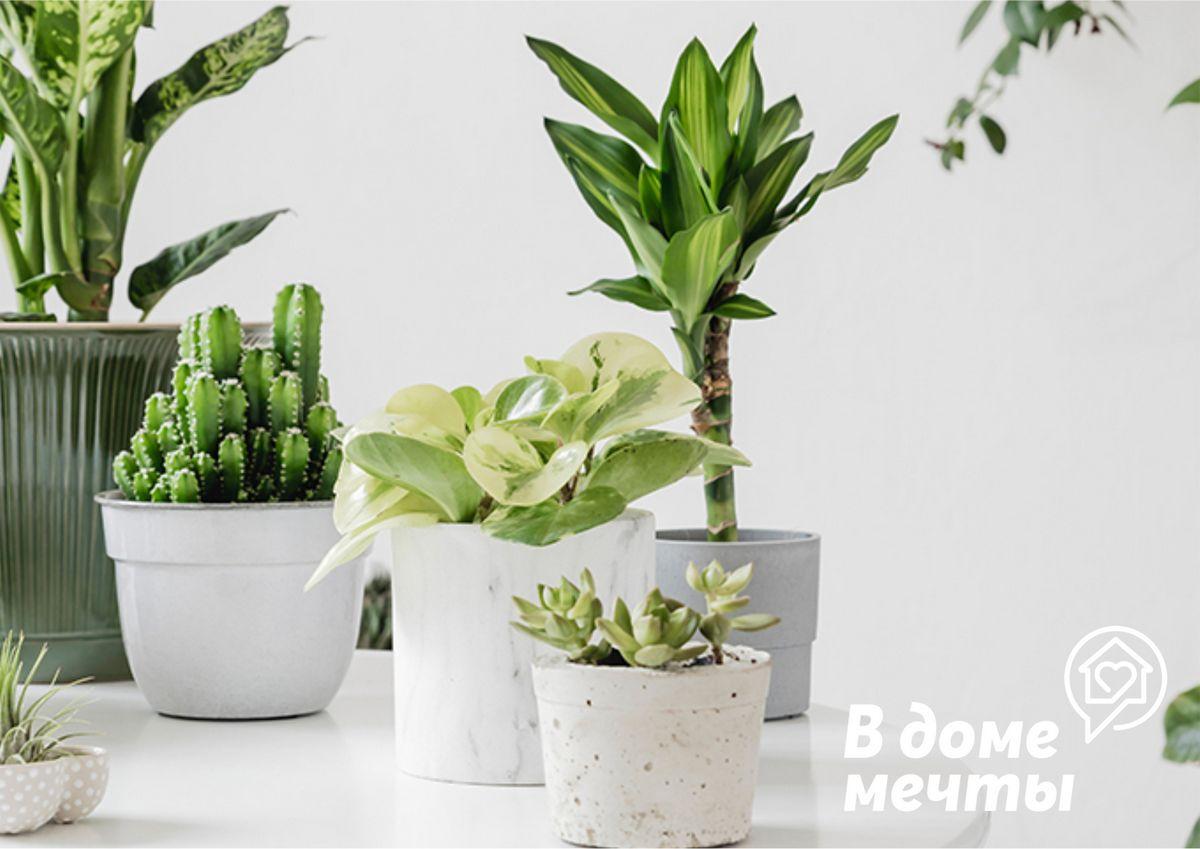 Ваши комнатные растения покрылись пылью? Используйте эти методы по уходу за домашними цветами!