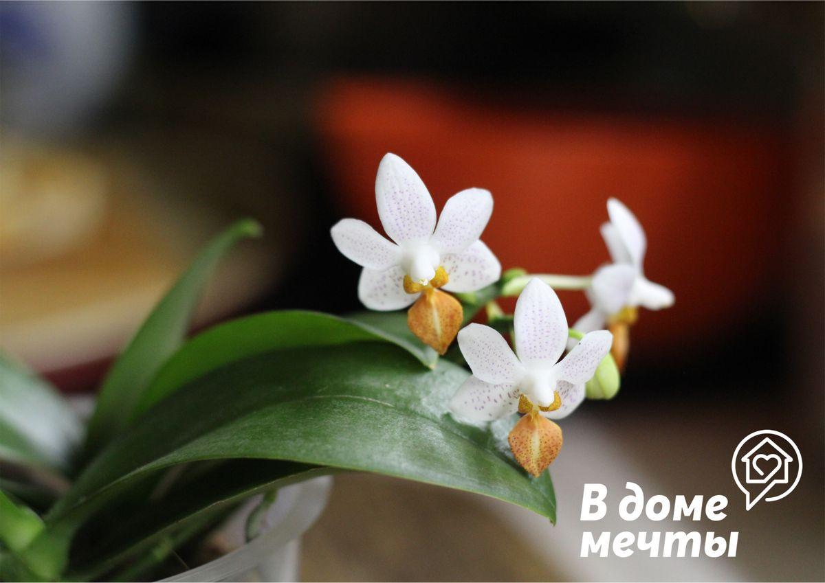 Топ-6 ошибок при выращивании комнатной орхидеи