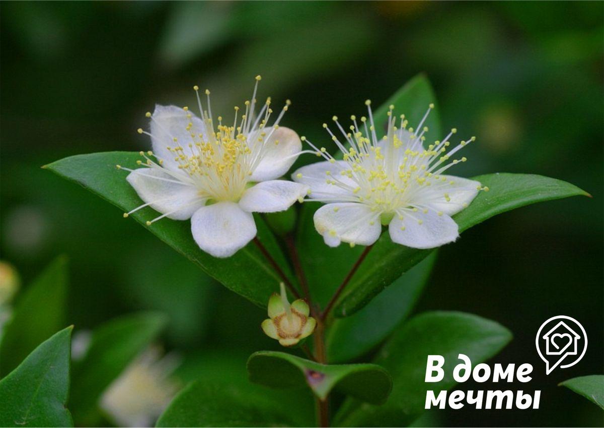 Эти растения принесут в дом гармонию и любовь! Шесть комнатных цветов, которые привлекают благополучие