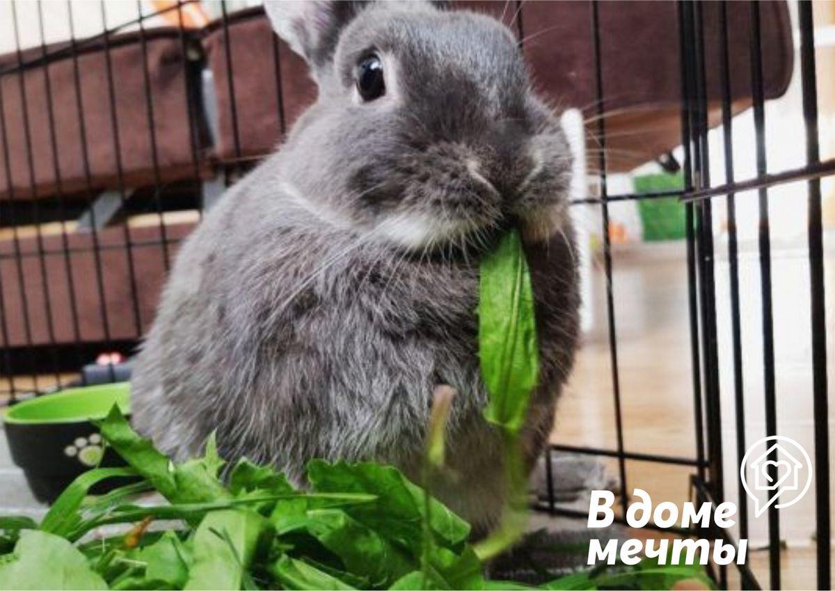 Как подобрать корм для кроликов, чтобы сделать рацион питомца сбалансированным? Обратите внимание на следующие виды корма!