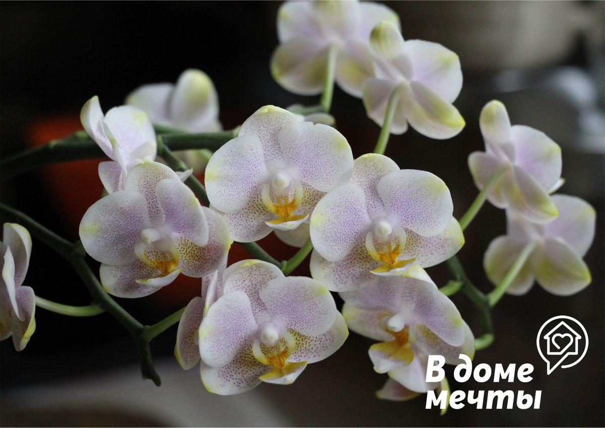 ●Поздняя пересадка. У орхидеи всегда должно быть достаточно места для корней