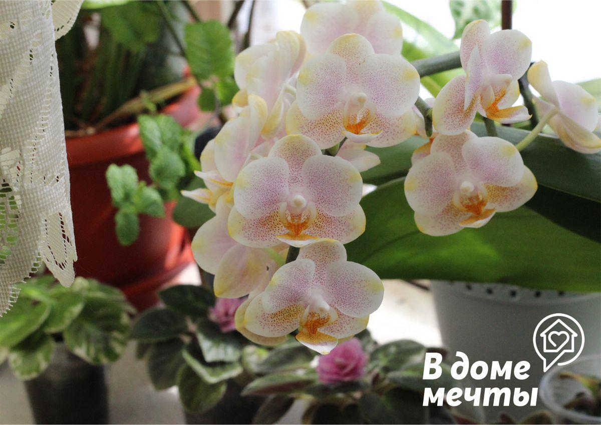 ●Посадка в темный горшок. Все орхидеи продаются в прозрачных горшках и не зря