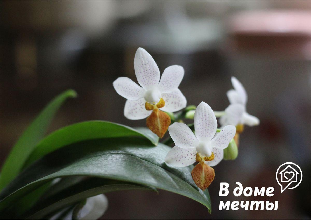 Если вы устраните все эти ошибки, ваши орхидеи не только не погибнут после покупки, но и в ближайшее время пышно зацветут!