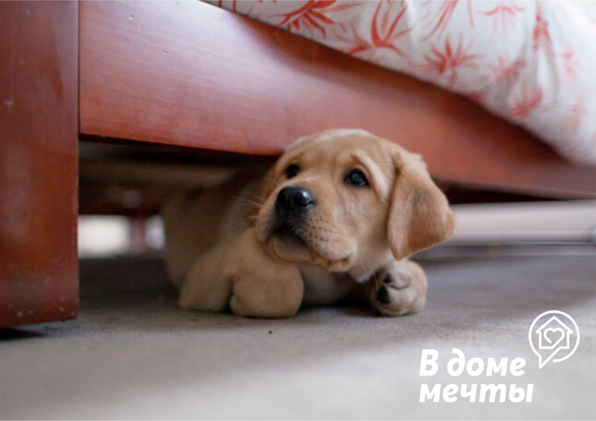 Чего на самом деле боятся собаки? Узнайте, как победить страх вашего домашнего питомца!