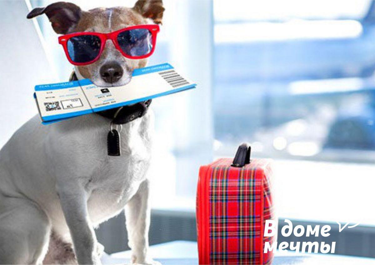 важные правила, помогут вам подготовиться к перелету с животными без лишнего стресса и хлопот