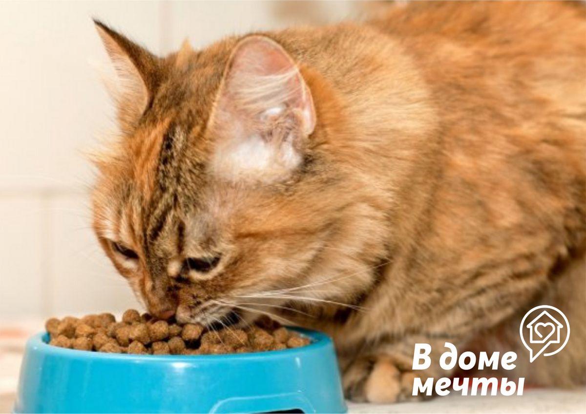 Кошка постоянно хочет есть: причины голода у кошки при сбалансированном рационе