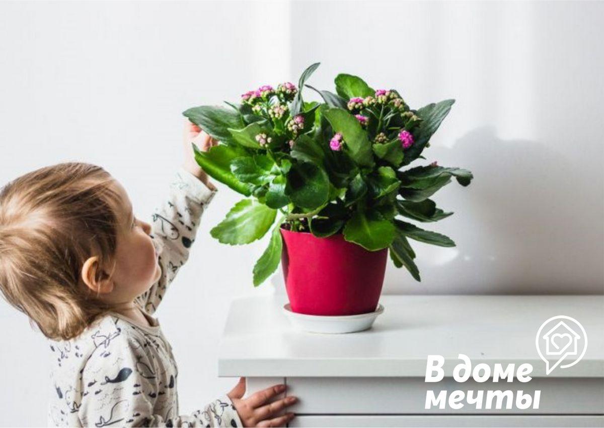 Топ-7 домашних растений для детской
