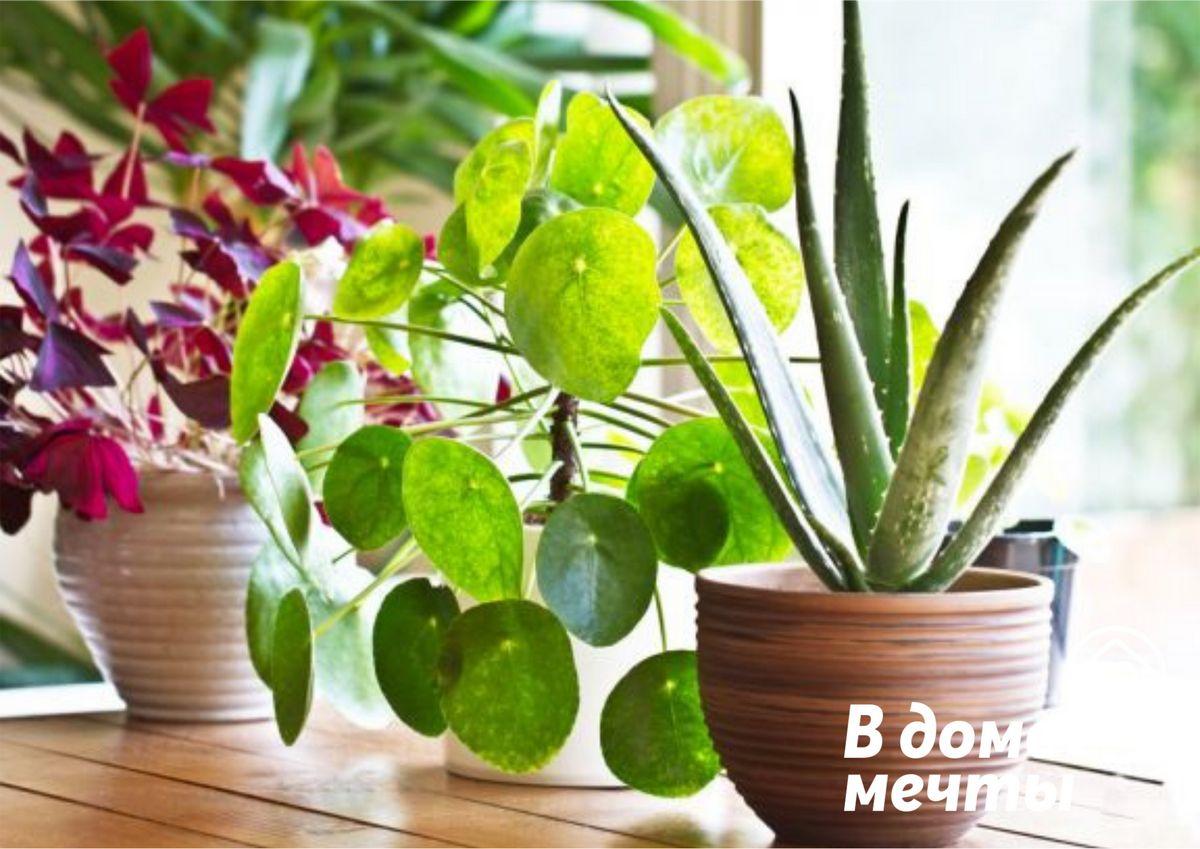 Осень на пороге - пора готовить комнатные цветы к периоду покоя! Комплексный уход за домашними растениями в сентябре