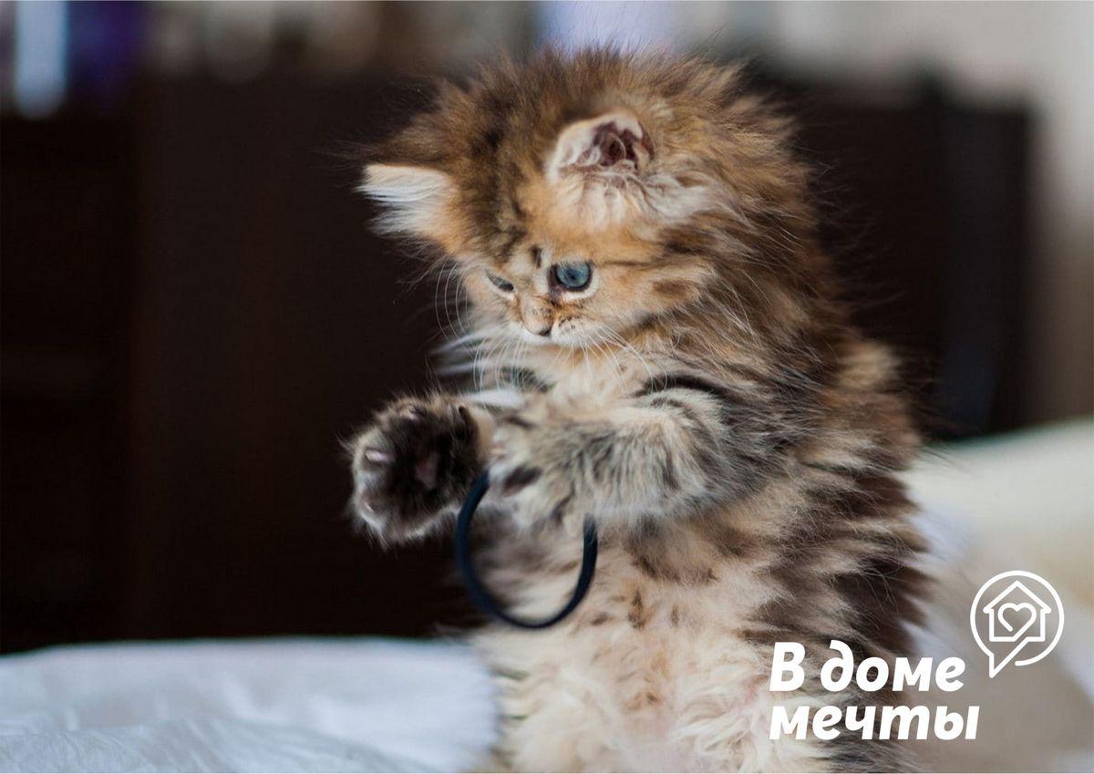Хотите завести миниатюрного домашнего питомца? Обратите внимание на эти породы самых маленьких кошек!