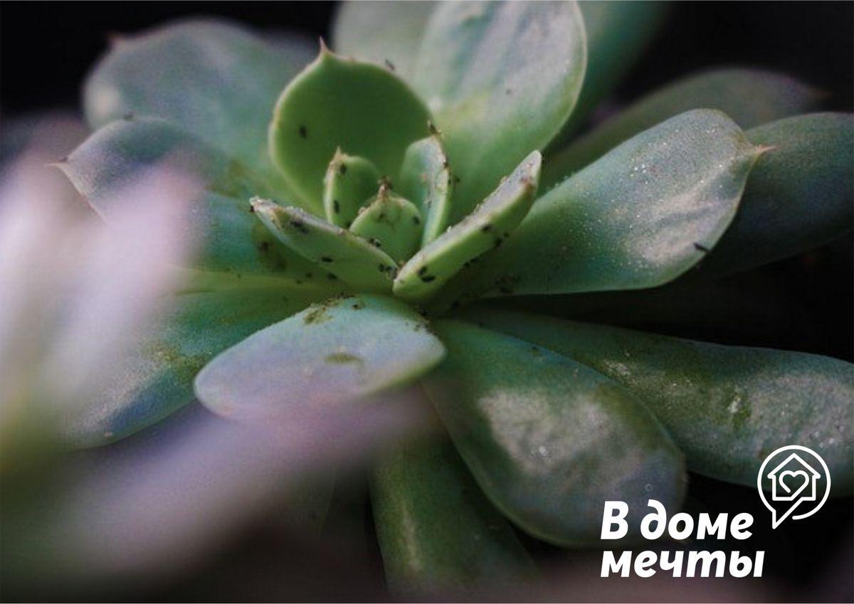 В доме завелись мошки? Узнайте, как быстро и эффективно избавиться от цветочных мошек без химии и вреда для здоровья!