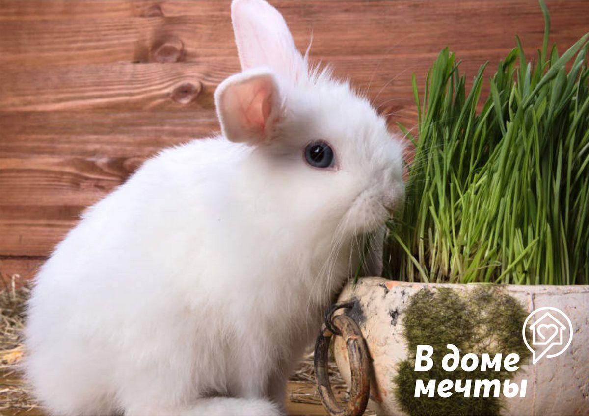 Как ухаживать за домашним кроликом: эффективный комплексный уход для красивой шерсти
