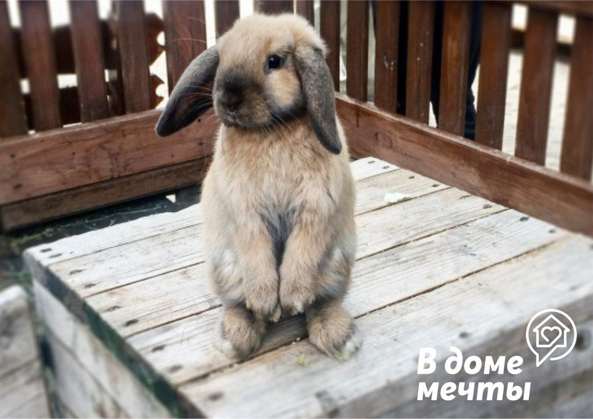 Стоит ли заводить кролика, если ребенок очень просит