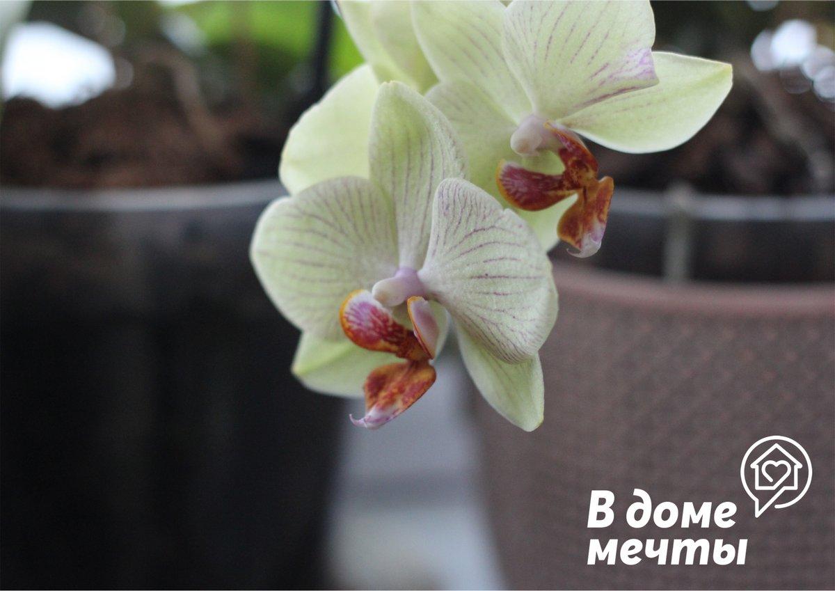 Хотите, чтобы цветы украшали ваш дом круглый год? Тогда вам нужны эти комнатные растения на подоконнике!