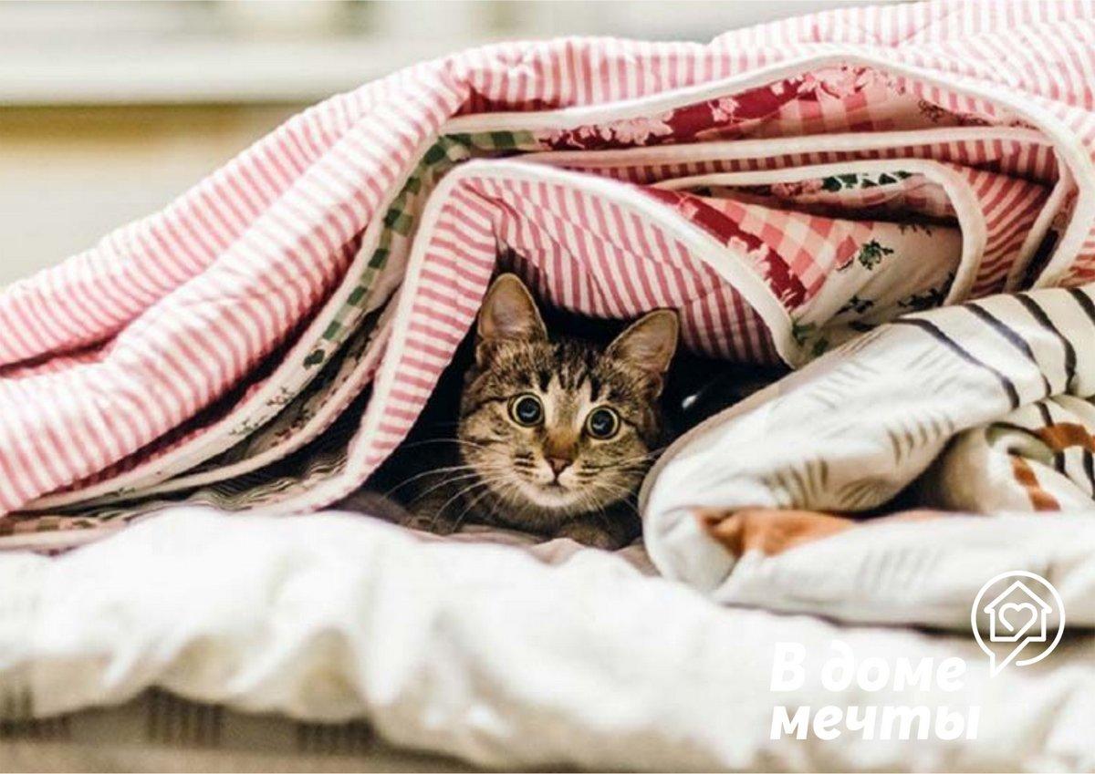 Кошка прячется и не идет на контакт? Пять причин поведения домашнего питомца