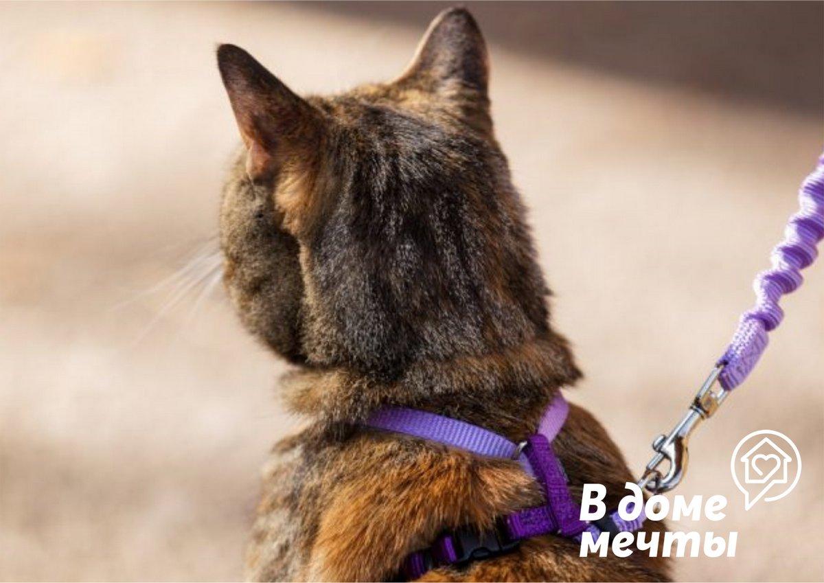 Почему опасно гулять с кошкой на шлейке