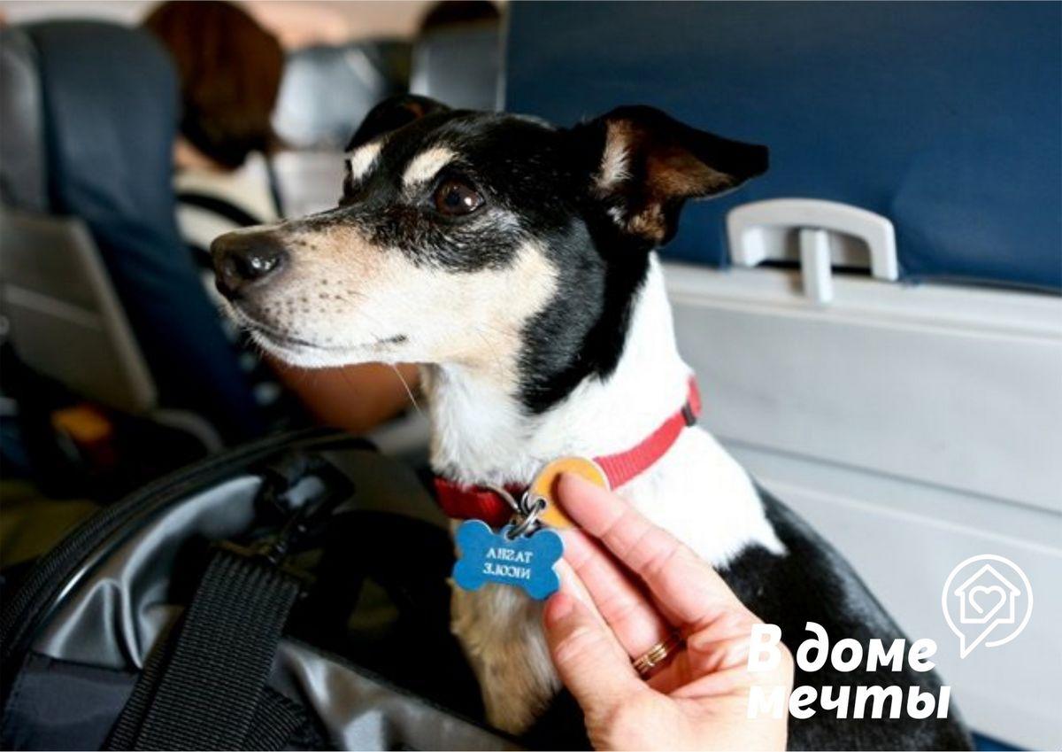 Как путешествовать с домашними животными на самолете? Очень просто, если вы знаете эти важные правила!